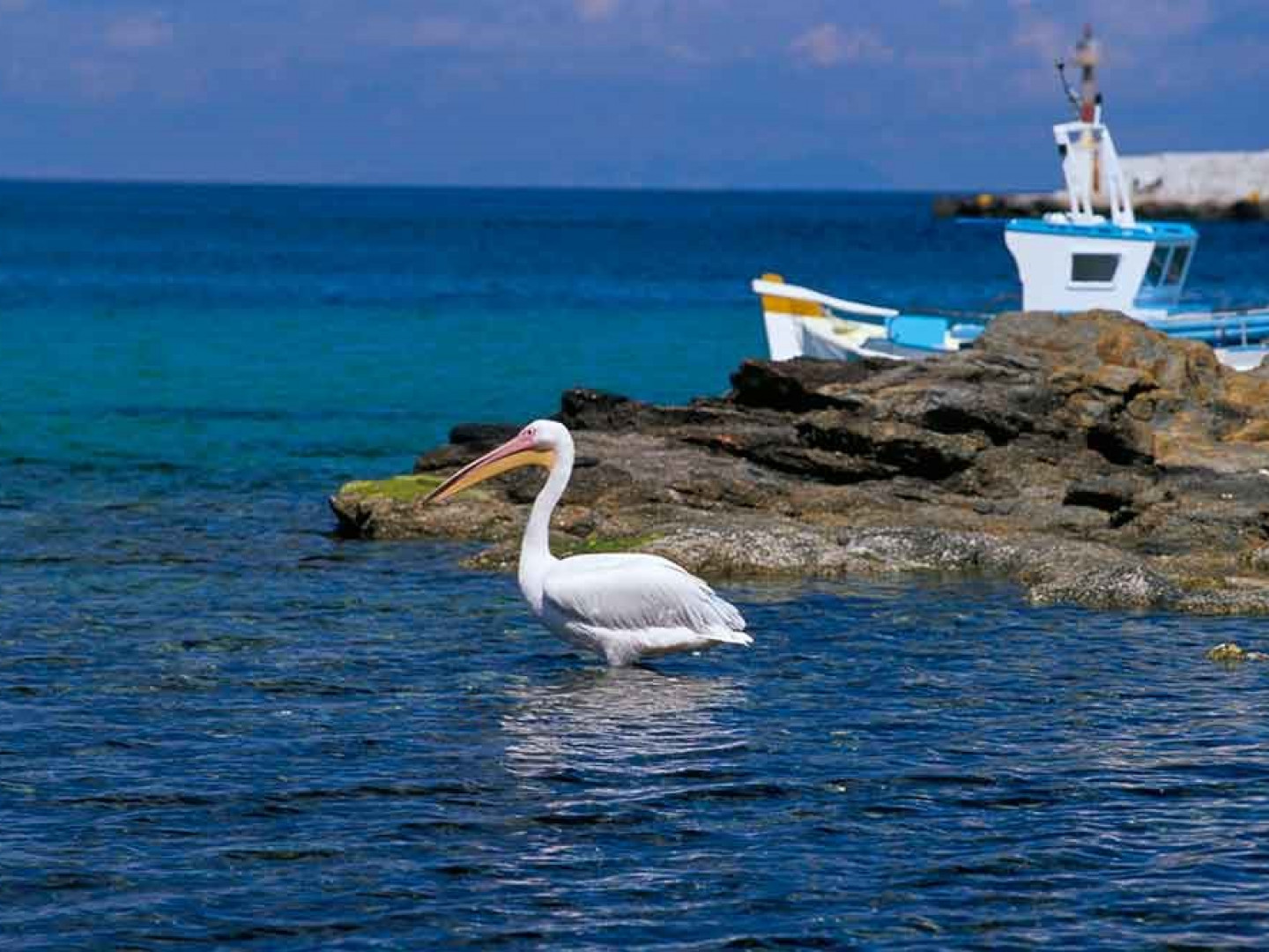 6. Pelicans are the mascots of Mykonos